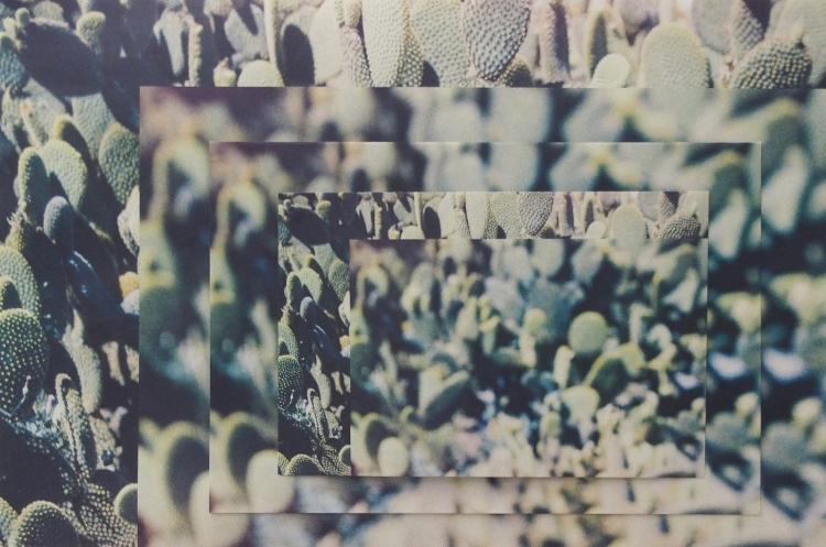 1-cactus_zoom1